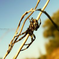 The Web Maker.3 by EmilieDurand