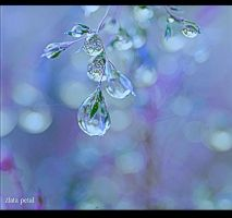 winter drops by Zlata-Petal