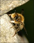 Bunklebee by SMALLBROWNFISH