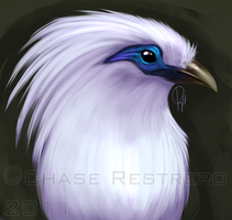 Bali Starling by Chase-Face