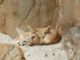 Fennec foxs by Twimperology