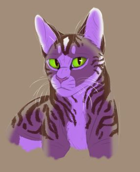 When a Cat Study Turns into a Painting by TJ-Bluewolf