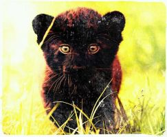 Panther cub by axiom463