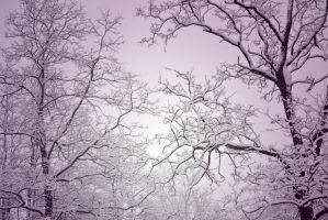 snow trees by MDC-PRODUCTIONS