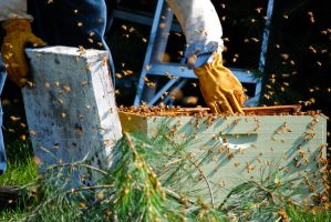 Beekeeper at Work by Aestera