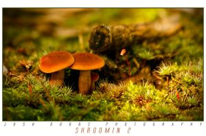 Shroomin 2 by leavenotrase