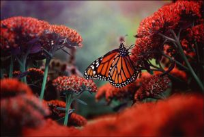 Butterfly In October by ZahrahLeona