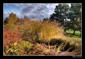 Dry Reed by RRVISTAS