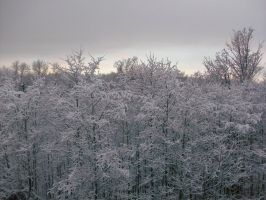 Snow topped forest by Silverwind91