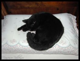 Pippo on the pillow by HoFattoSoloCosi