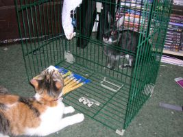 :The Cage Match: by Asher-Bee