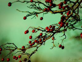 Red dots by irgendeine