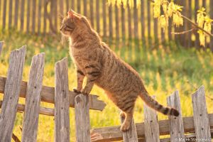 Cat in the morning by GreenShadow23