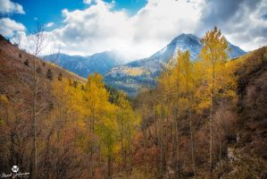 Through the Aspen Colors by mjohanson