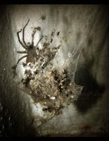 Spiders by Andenne