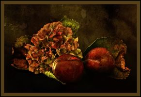 Still Life by zsphere