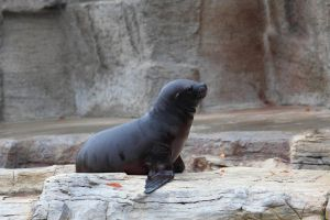 Sea Lion 1 by R4xx4r