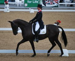 Dressage 29 by equinestudios