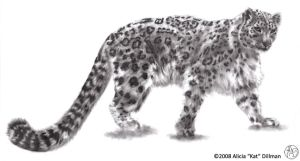 Snow Leopard 2 by KatGirlStudio