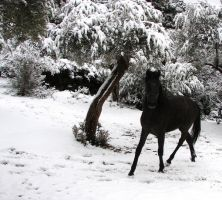 Snowcovered Olivetree by Chequer
