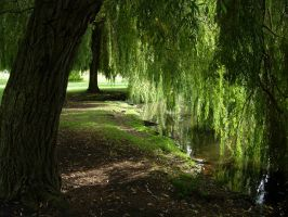 217 - under the willows by WolfC-Stock