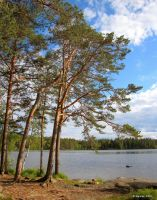 Pine trees by the lake by Pajunen