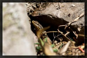 Lizard 13 / Out of the hole by deaconfrost78