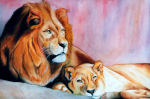 Lions by cocco91