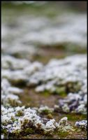 Macro Moss by impgrrrl