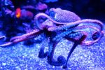 Scurrying Octopus by JKase911