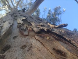 Looking Up A Tree by WaffeeIsAwesome
