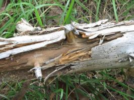 Log in Decay by picworth1000wrds