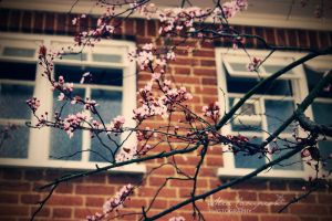 Spring knocking on my window by shantaycinnamon