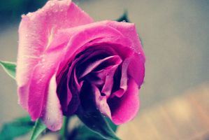 Rose with Droplets by LizzDurr121