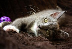 Kitten by steing