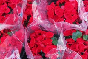 PLASTIC FULL OF ROSES'BEAUTY by isabelle13280