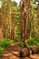 Forest Sculpture Trail by PhilsPictures