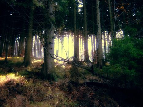 forest bright by Ja2ger