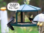 Dude Tic-Tac for Prints by BlueSolitaire