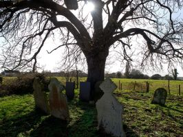 Graves late afternoon by davepphotographer