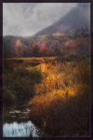 Acadian Autumn in Dispelling Noonlit Mist by AugenStudios