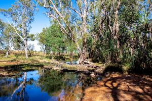 Amongst the River Gums by midnightrider79