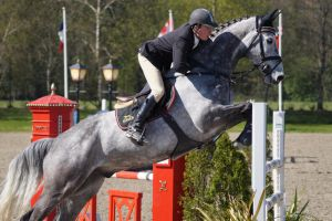 Grey Horse - Show Jumping Stock 8.4 by MagicLecktra