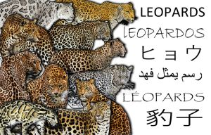 Leopard Collage by rogerdhall