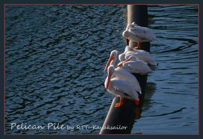 Pelican Pile by kayaksailor