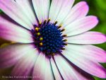 Flower Close up by nitro912gr