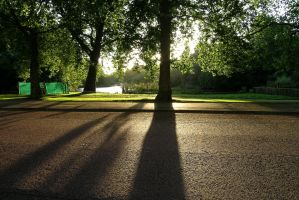 Shadow play by Beekveld