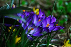 spring flowers by rockmylife