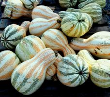Striped Gourds by justamom