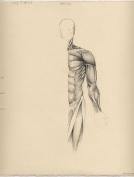 Flayed Man Torso - Front by Catipher